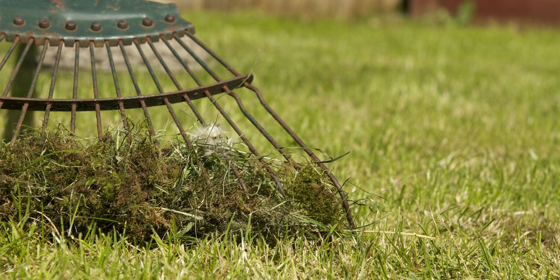 How to get rid of moss on your lawn?