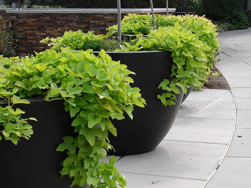 Move Your Plants Outdoors